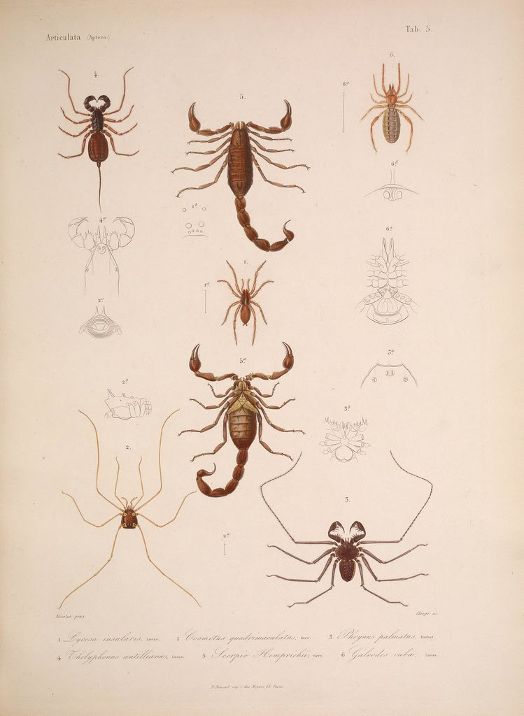 natural history illustration from  Cuba 1838-1857 o