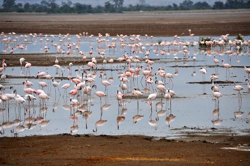 FlamingosReflectingPool