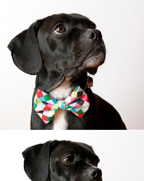 Men S Ties With Dogs On Them