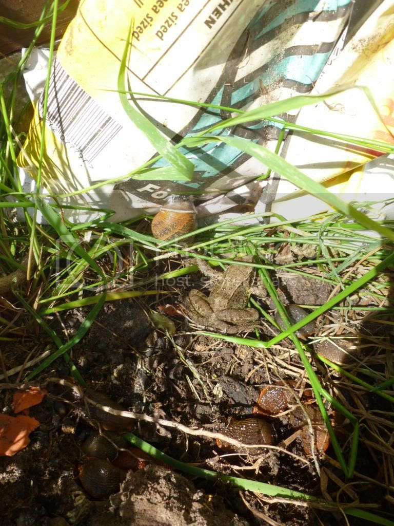 frog, slugs, snail