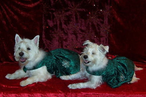 Barkettes Costumes-Keli & Penny