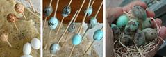 Wax Dipped Robin's Egg Beads