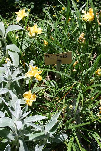 such a berkeley iris