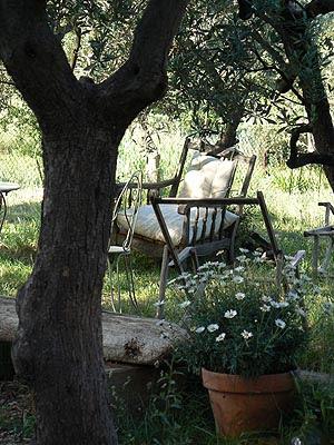 le jardin, le matin.jpg