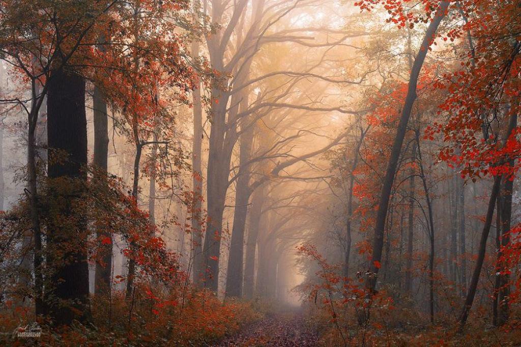 Os bosques outonais oníricos de um fotógrafo tcheco 17