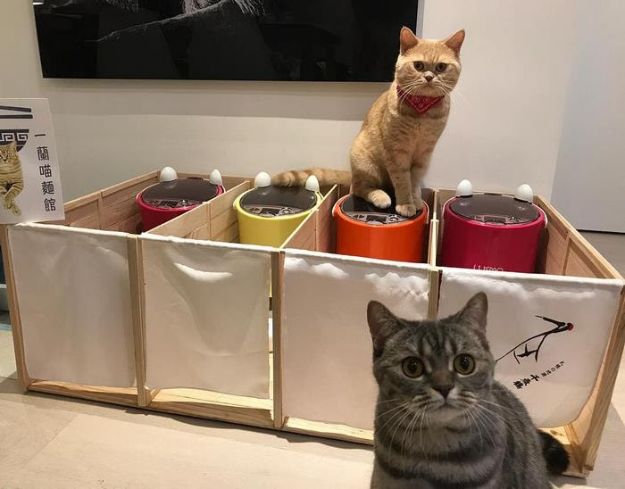 fat-dad-cat-food-partitions-meatball-hong-kong-6