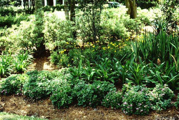 Designing With Native Plants And Naturalistic Landscapes