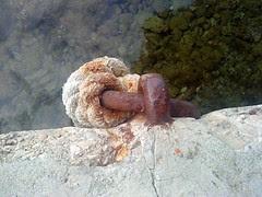 morska1 - odriši grop