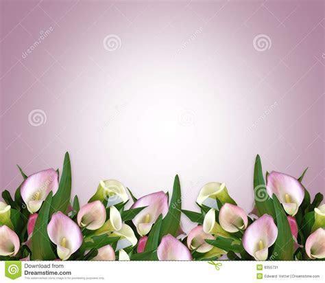 Calla Lily Border Mauve Stock Image   Image: 8355731