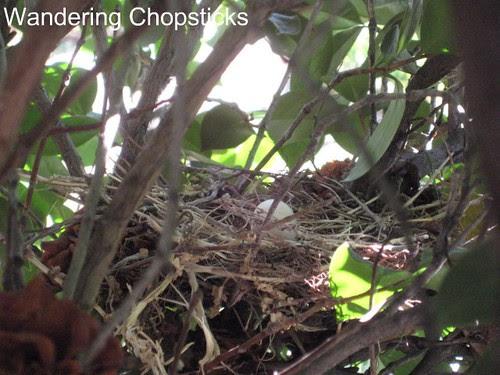 No Turtle Doves, Agapanthus, Desert Rose, Gardenia, and Jasmine 1