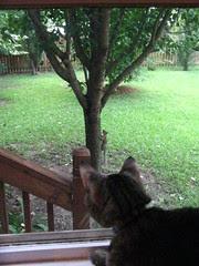 Maggie squirrel watching