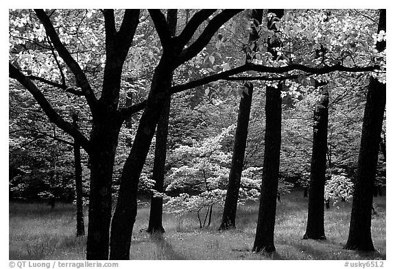 Black And White Picturephoto White And Pink Trees In Bloom