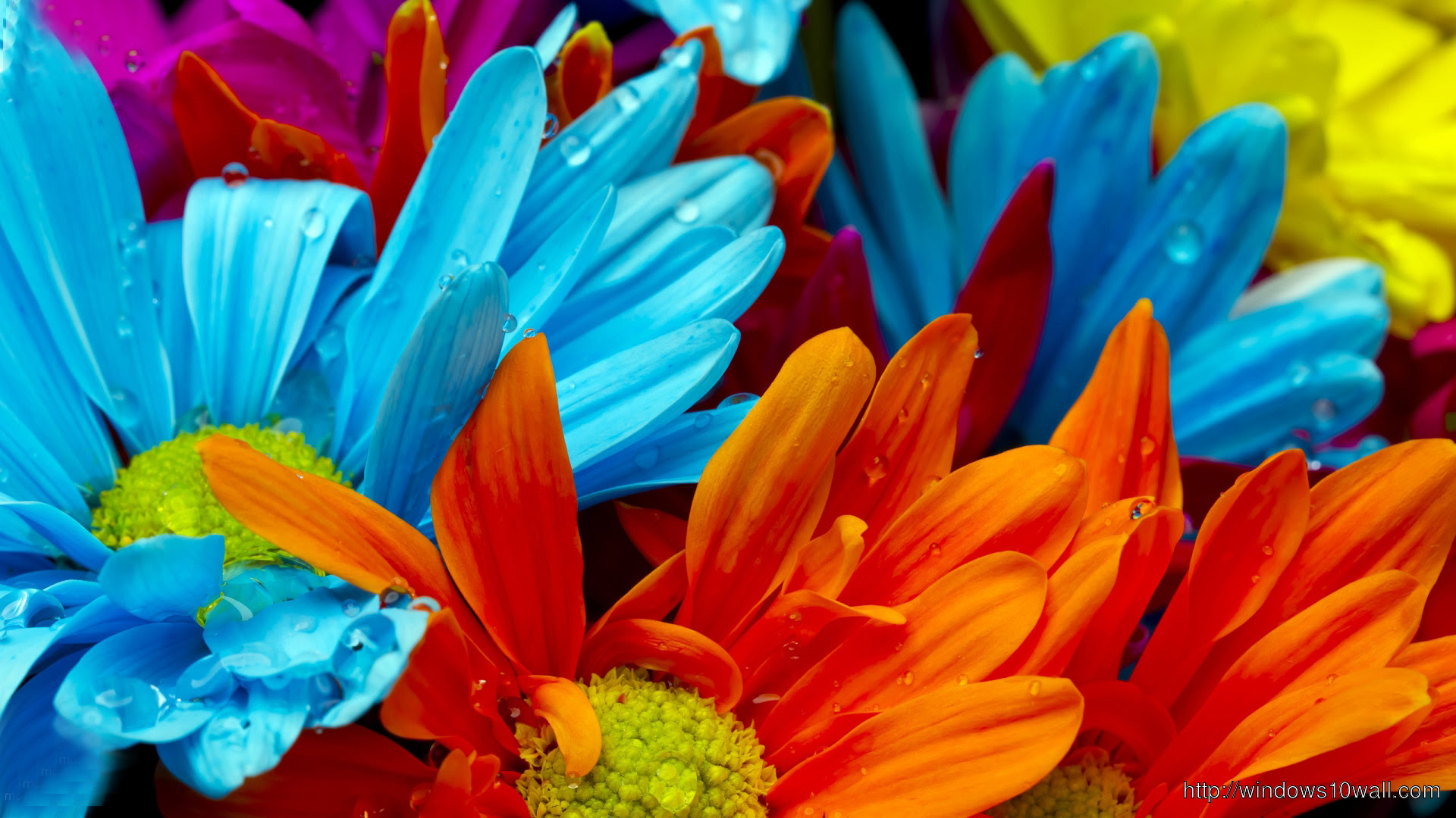Colorful Flowers Effy Moom