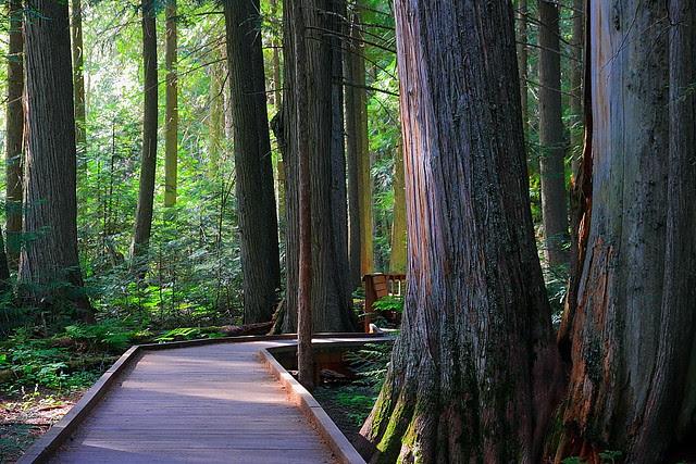 IMG_2541 Trail of the Cedars, Glacier National Park