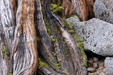 1moss-in-tree-close-up!.jpg
