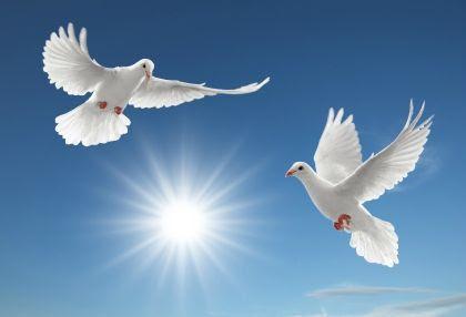 colombes couple et soleil