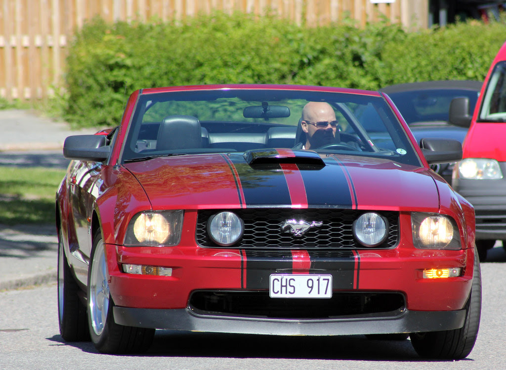 Mustang of the Day