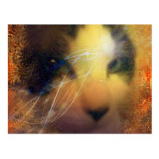 snowshoe full of warmth kitty postcard