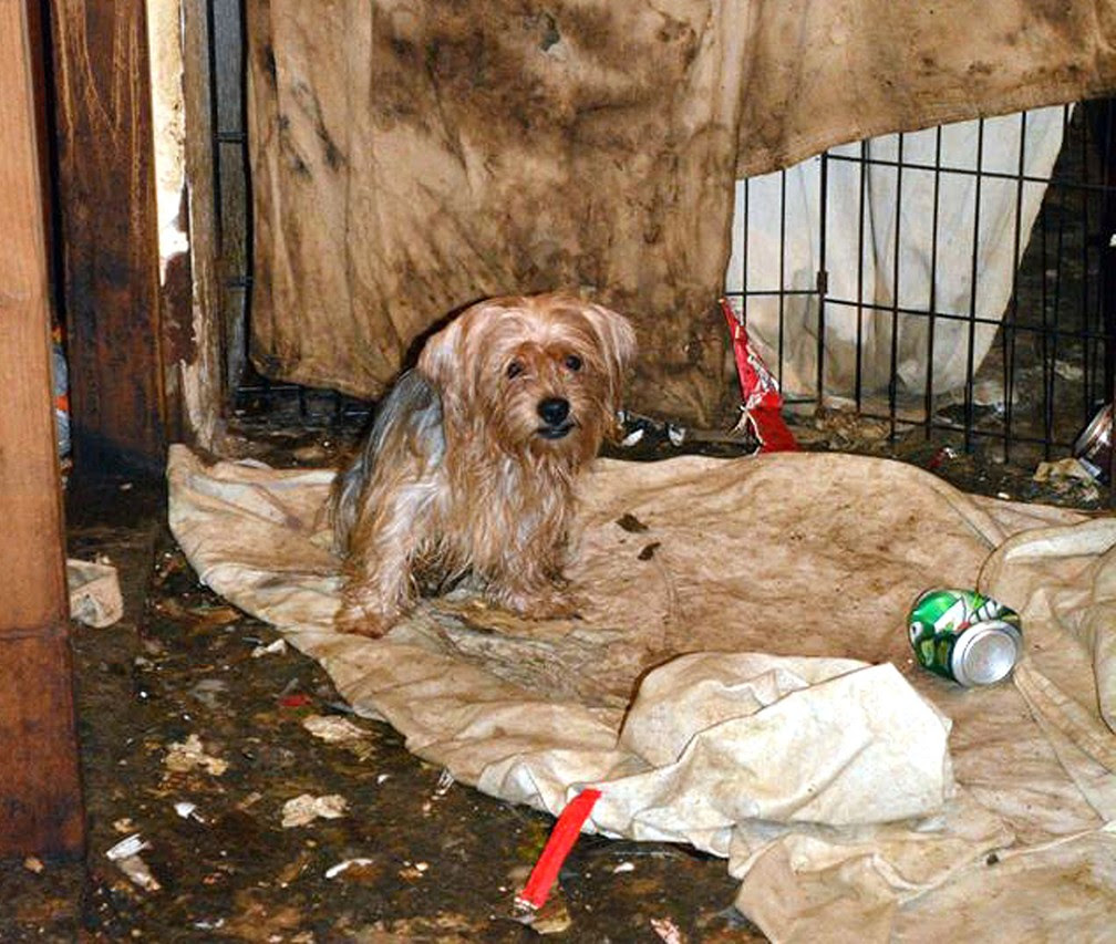 Cachorrinhos foram encontrados em condições precárias (Foto: San Diego Humane Society via AP)