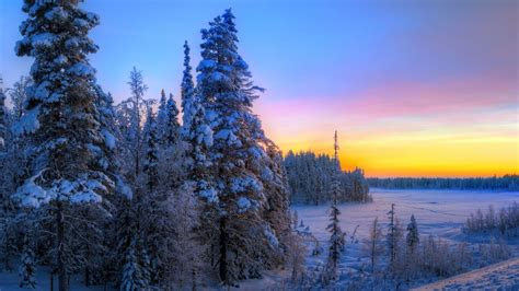 full hd wallpaper fir tree winter frost sunset amazing
