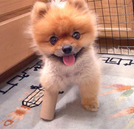puppy-cute-baby1