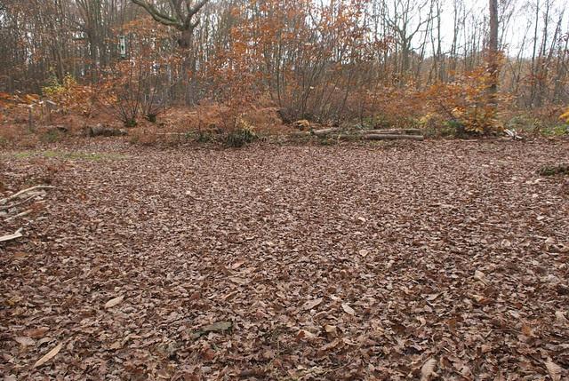 DSC_5141 Autumn leaves