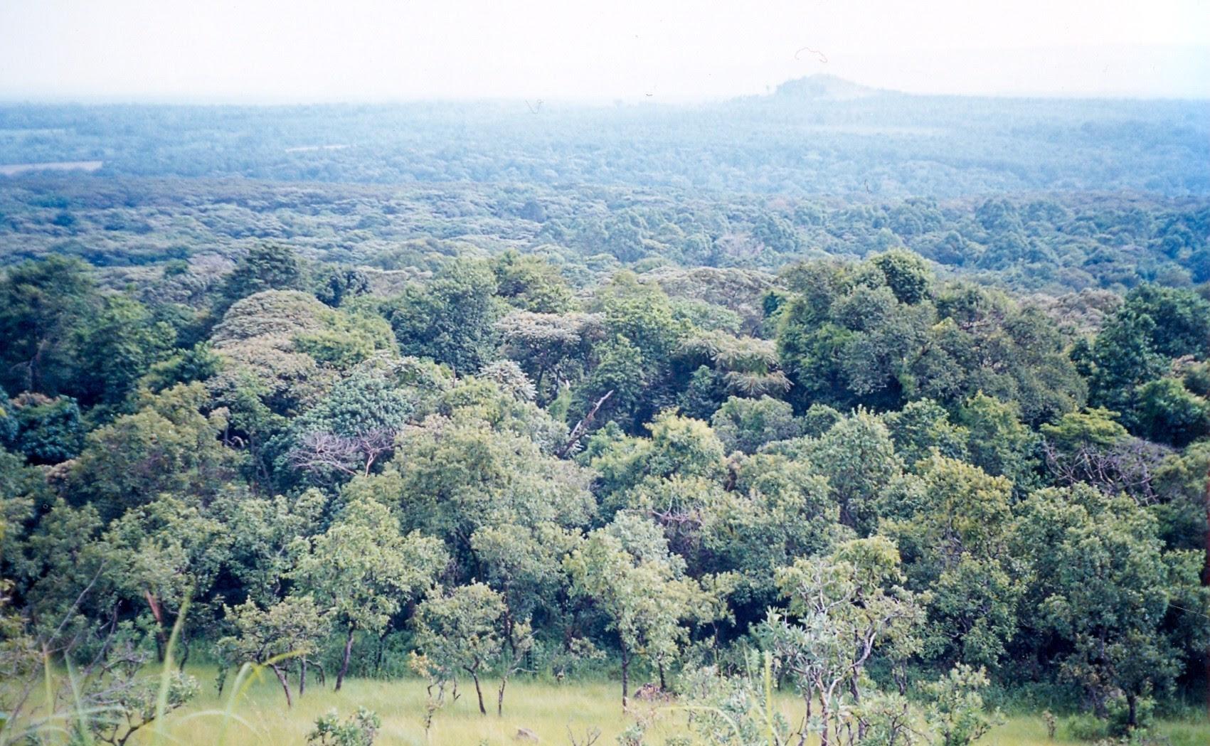 http://upload.wikimedia.org/wikipedia/commons/c/c8/KakamegaForest.jpg