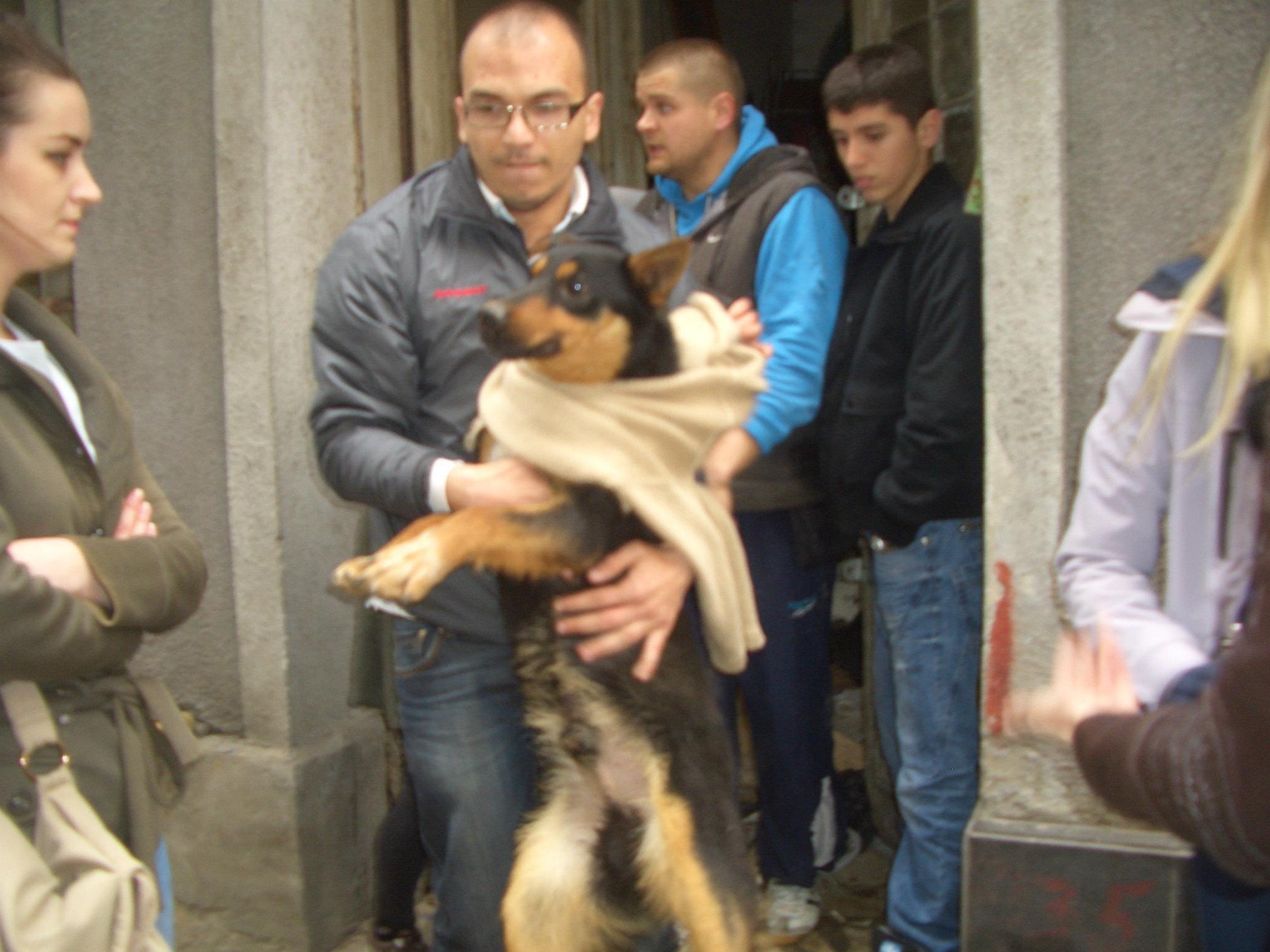 Uno dei cani murati vivi nell'intercapedine di una cantina di Sarajevo