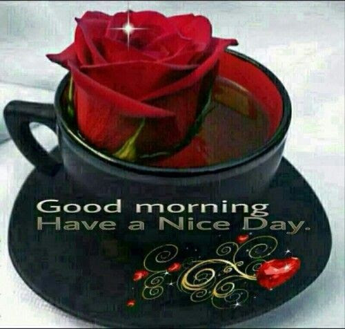 Rose Coffee Good Morning Have A Nice Day Quote Pictures Photos