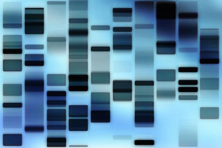 DNA fingerprint