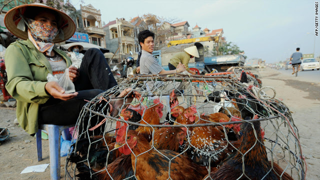 A vendor feeds her chickens on Hanoi's outskirts. Authorities fear a mutant strain of the H5N1 virus could spread from Vietnam.