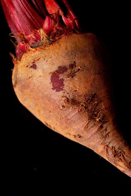beetroot© by Haalo