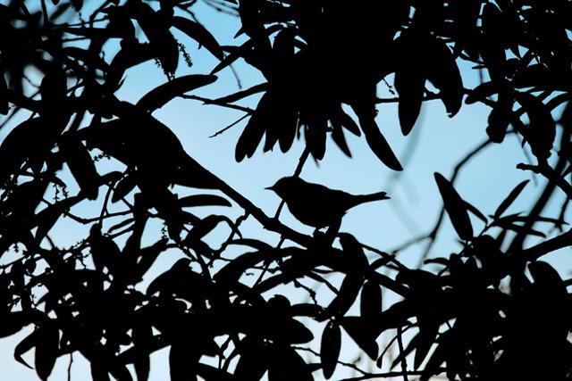 Bird sillhouette