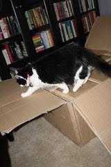 Josie investigating the big box