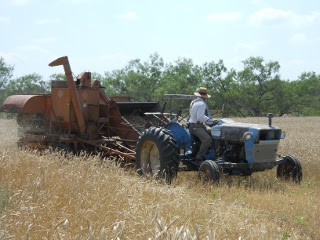Harvesting the 2012 Wheat Crop with a Combine
