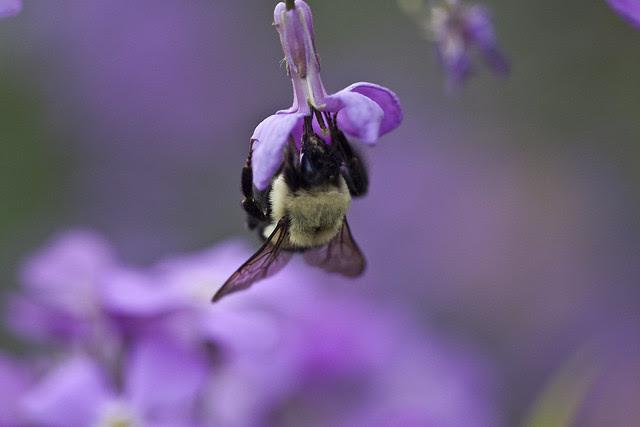 bee in purple