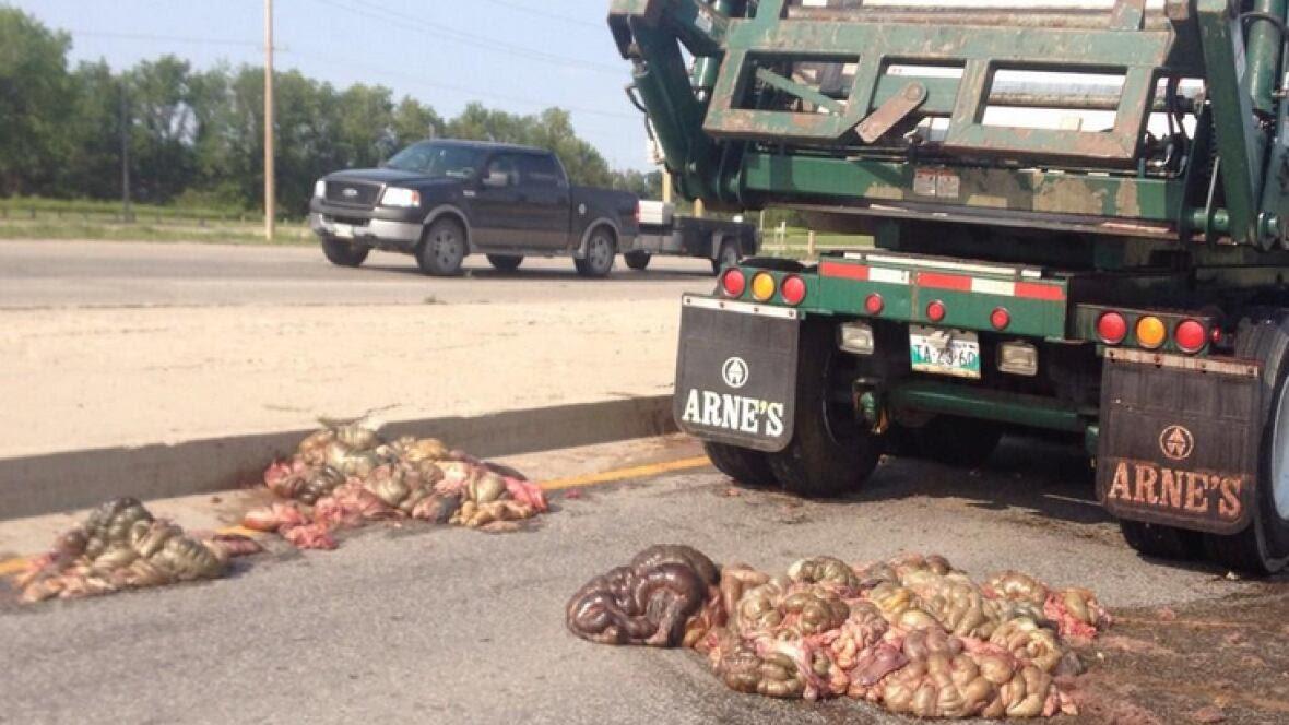 Dump Truck Of Guts Spills Load On Perimeter Highway