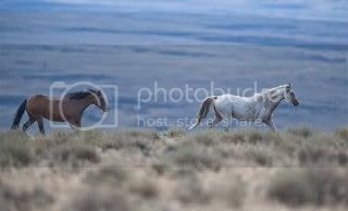 Beautiful Photos from the Wild Horse Roundup