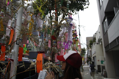 Photographing the tanzaku