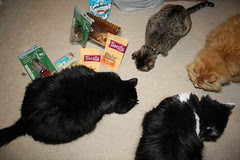 Huggy Bear, Maggie, Jasper and Josie enjoying some treats