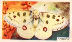 papillon 08