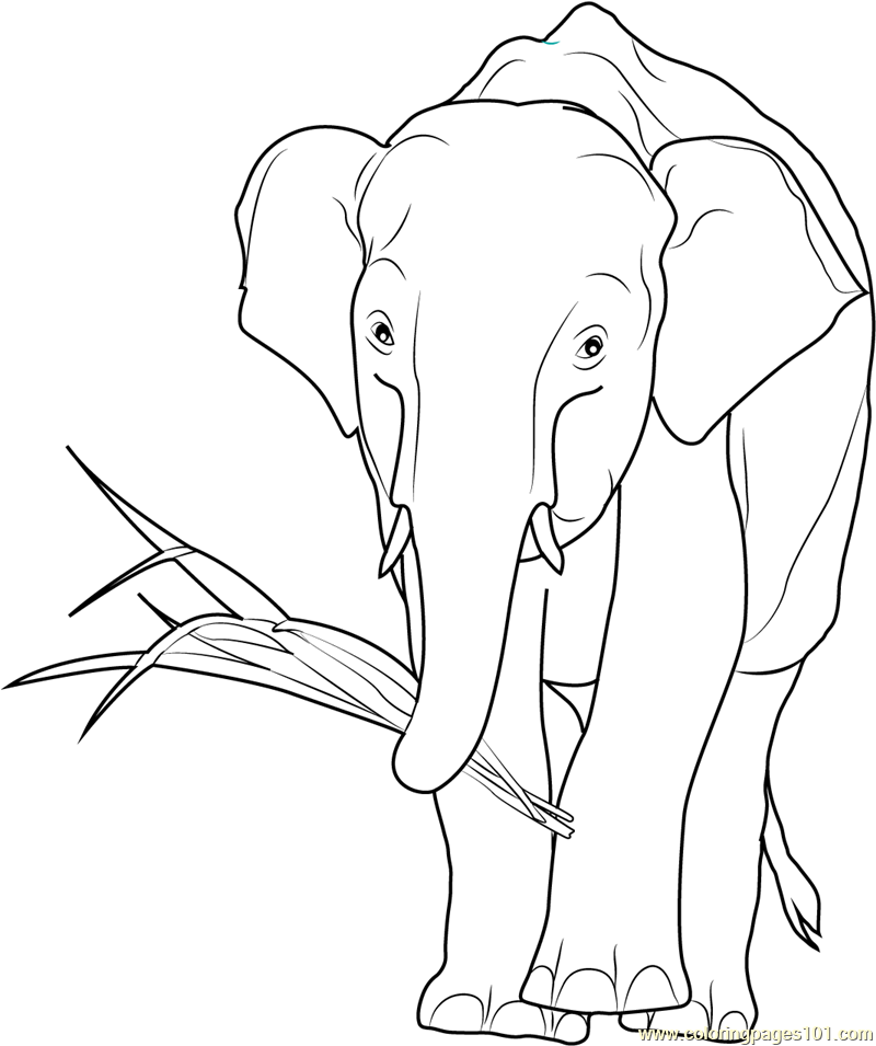 African Elephant Drawing at GetDrawings | Free download