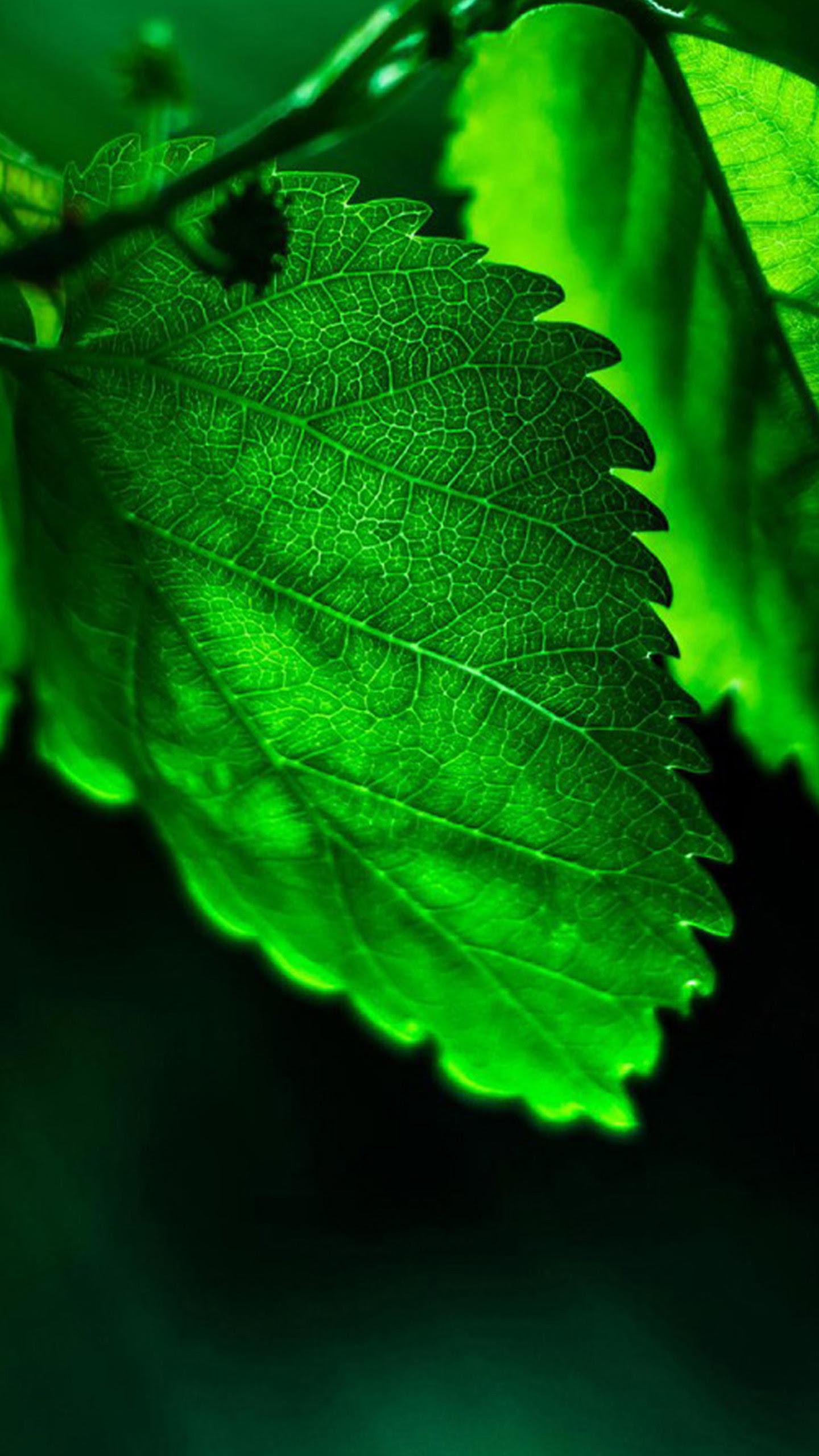Green Leaf Wallpaper HD (70+ images)