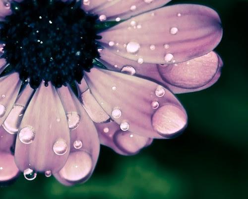 Flower wet