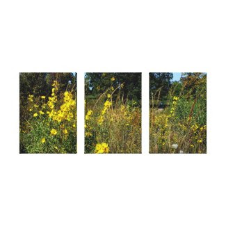 Yellow Wildflower Garden Stretched Canvas Print Canvas Print