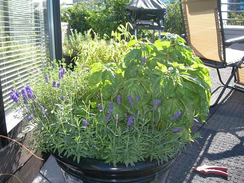 2009-07-19 Mixed Herb Pot (1)