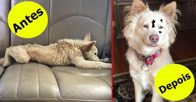 Cães que mudaram completamente depois de terem sido resgatados