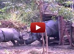 Rhino video