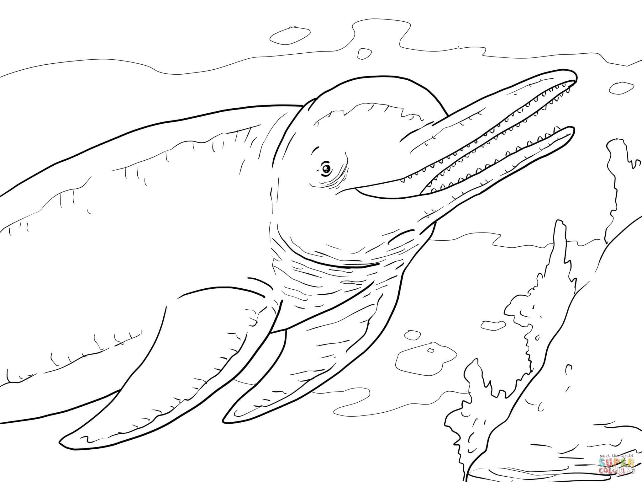 Boto oder Amazonasdelfin