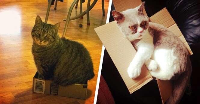 Gatos que pensam que cabem em caixas pequenas